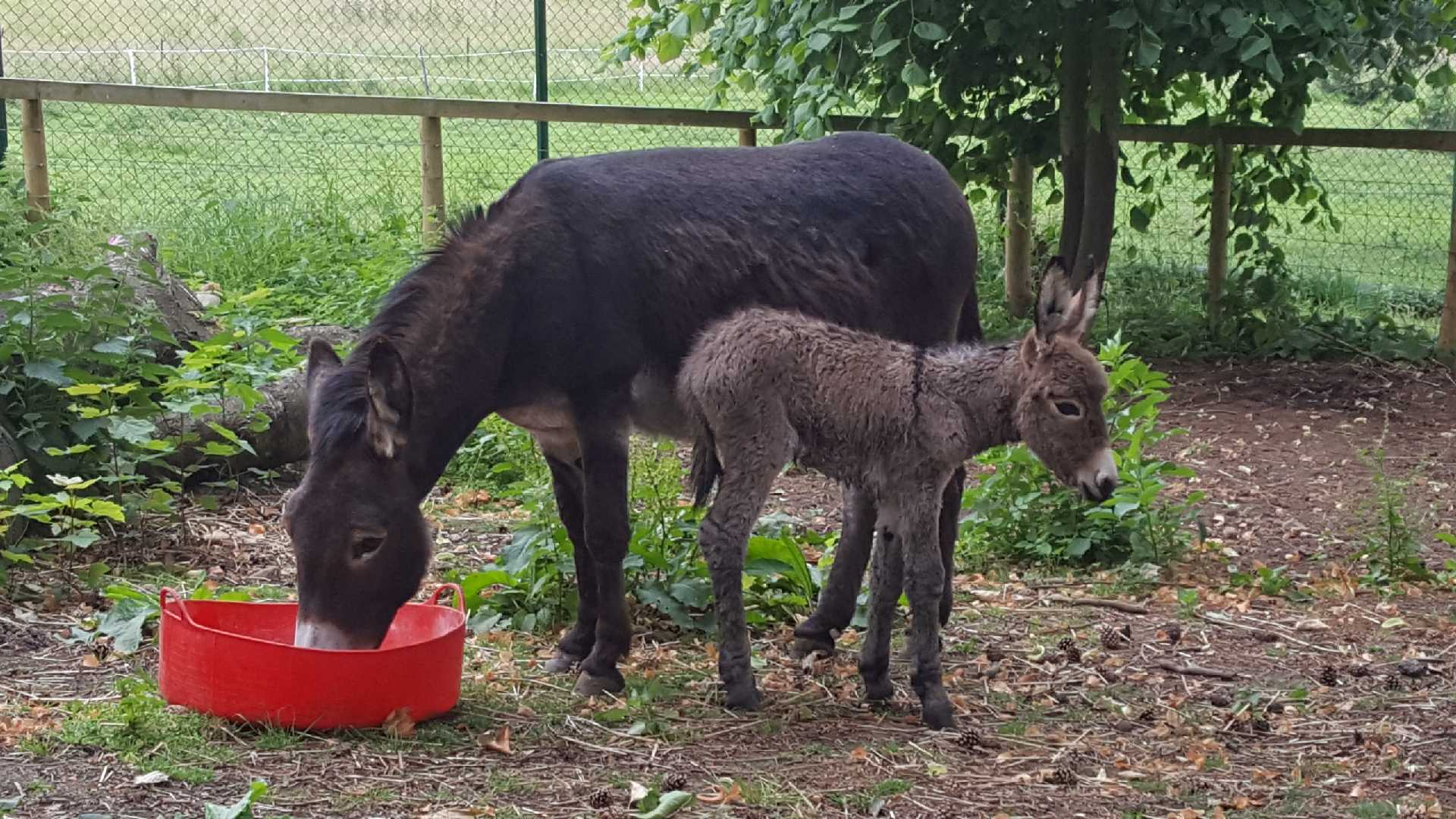 Harewood Welcomes New Baby Donkey Into The Fold